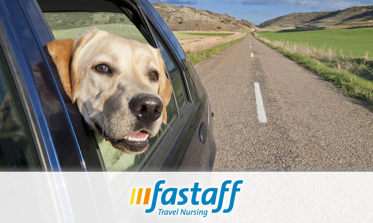Pets and Travel Nursing: Do they Mix?   Fastaff Travel Nursing
